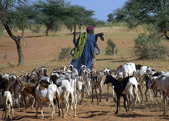 La vita del pastore sorge..... di paolo-spagg