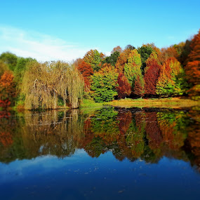 Autumn colours by Ursula Herbst - Landscapes Forests