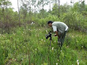 Photo: Brian and Siggi filming Sarracenia leucophylla at Splinter Hill Bog Preserve in Alabama.
