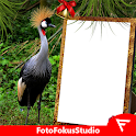African Crowned Crane Insta DP icon