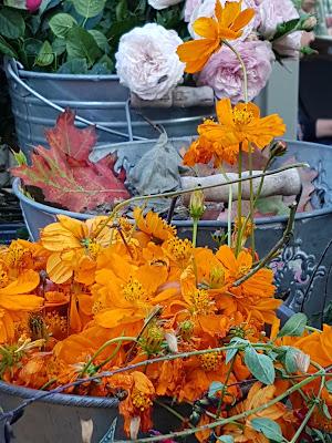 Arancio nel secchio di patrizia_ruatto