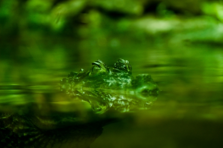Immerso nel verde di morganio