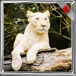 White Lion Pack 2 Wallpaper