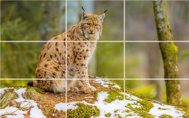 Puzzle - Wild Cats - screenshot