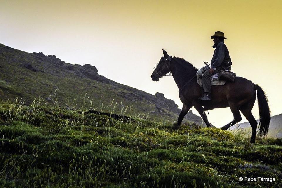 La imagen puede contener: caballo, cielo, hierba, exterior y naturaleza