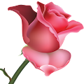 Flowers and Roses Images Wallpaper Gif 4K APK