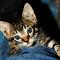 Attact kitten.jpg