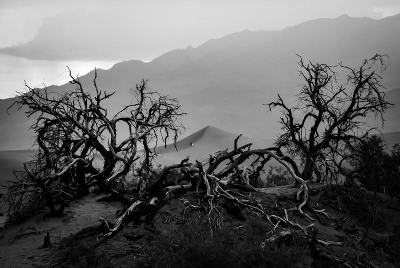 Desolation di ph. Manuela Condelli