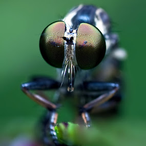by Ram Suson - Animals Insects & Spiders