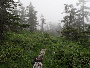 木道を進む