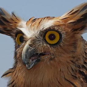 THE YELLOW EYES by Ian Sumatika - Animals Birds