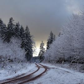 by Libor Marek - Landscapes Forests