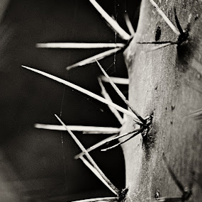 Cactus by Tracey Zettler - Nature Up Close Other plants ( abstract, black and white, thorns, close up, photography )