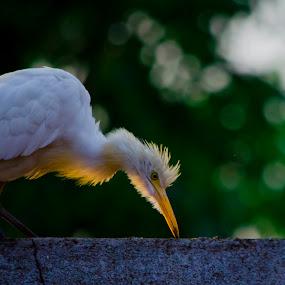 some thing i can eat by Manjunath Nagesha Rao - Animals Birds