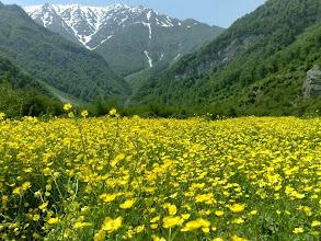 Photo: Elburzi legelő, Virágzó Elburz, Elburz, havasi legelő