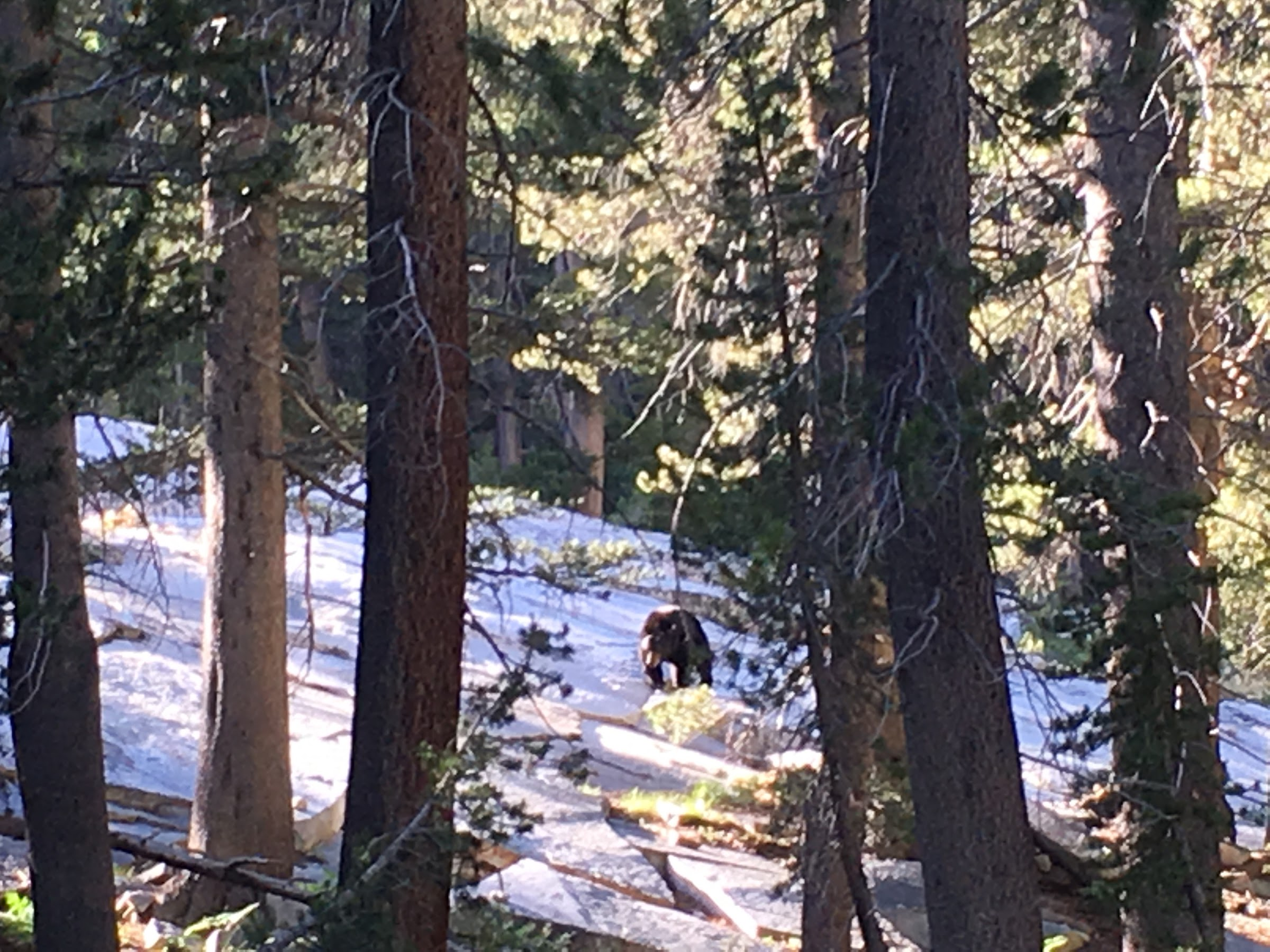 Morning bear sighting