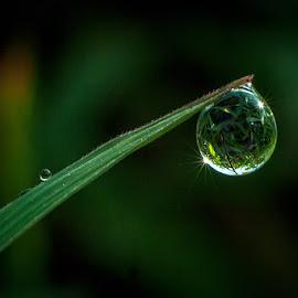 my dew by Kawan Santoso - Nature Up Close Natural Waterdrops
