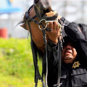 I said NOOOOOOO!!!!! by Cristobal Garciaferro Rubio - Sports & Fitness Other Sports ( caballo, horse, teet )