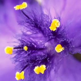 by Tammy Cassford - Flowers Single Flower (  )