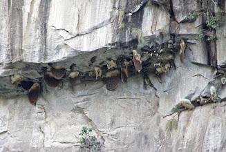Photo: Ruches d'abeilles sauvages