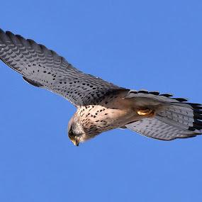 by Jiří Staško - Animals Birds