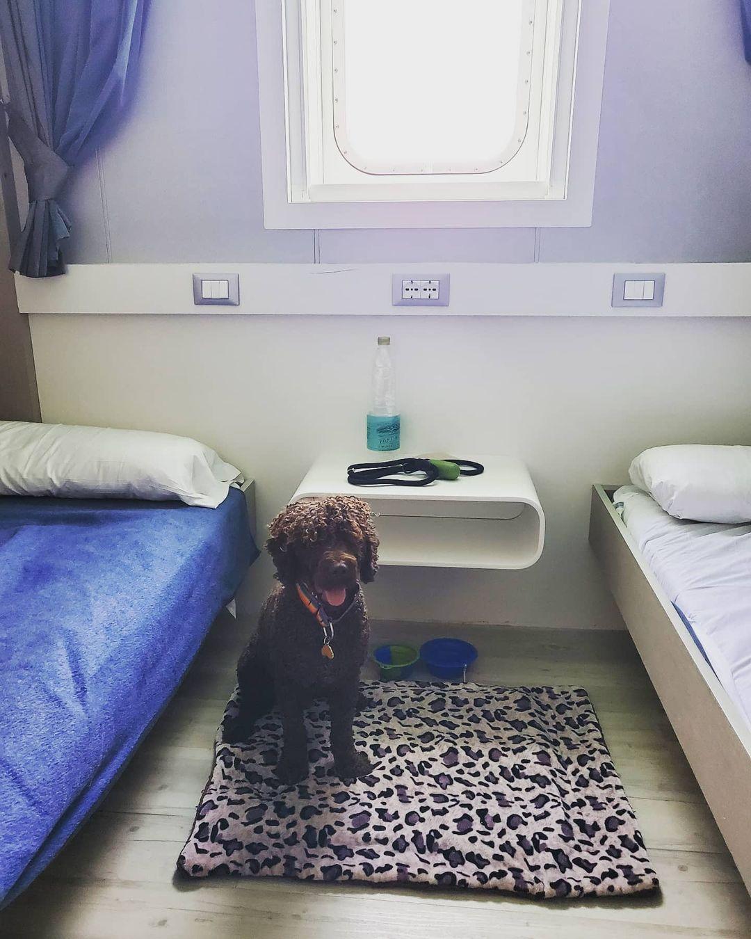 Camarote apto para mascotas