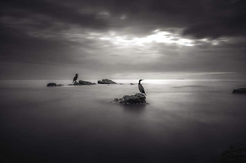 I cormorani di Simonetti Andrea