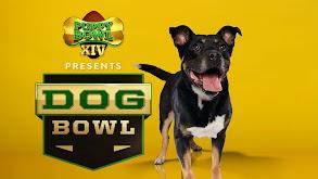 Puppy Bowl Presents: The Dog Bowl thumbnail