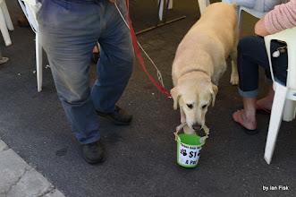 Photo: Dog with Donation bucket