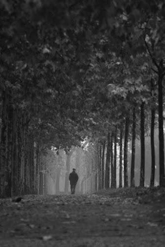 Lungo il viale del silenzio di kikka78