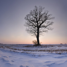 lonely by Eugenijus Rauduve - Landscapes Prairies, Meadows & Fields ( field, winter, tree, sunset, snow )