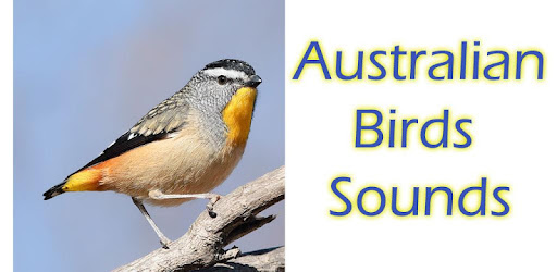 Australian Birds Sounds Free - Apps on Google Play