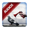 divertidos engraçados audios icon
