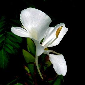 Flower by Anupam De - Nature Up Close Flowers - 2011-2013