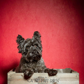 by Martyn Norsworthy - Animals - Dogs Portraits