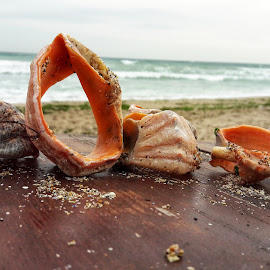 SeaShells by Aura Vasile - Instagram & Mobile Android