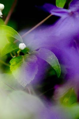 Sfumature naturali di nicolamelottophotography