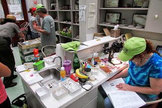 Photo: Vicky Loo working on weevils.