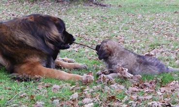 Photo: Bon il insiste, je vais lui montrer qui est la plus forte