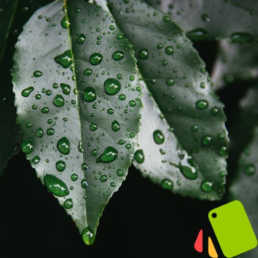 テーマ グリーン 個人化 App LOGO-硬是要APP