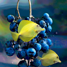 Grapes in the Sea by William Kauffman - Digital Art Animals ( saltwater fish, blue, fish, water, aquarium, grapes )
