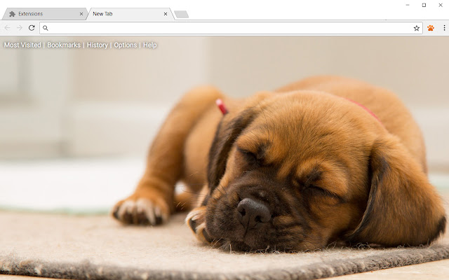 Cats & Dogs Wallpapers Cat Dog Puppies Themes