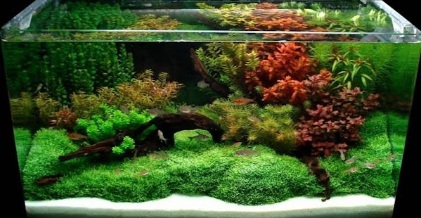 Aquascape design ideas android apps on google play - Design aquasacpe ...