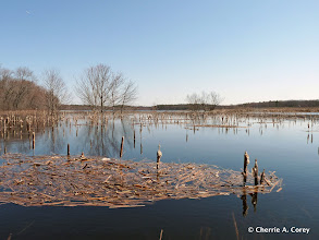 Photo: Western impoundment looking east
