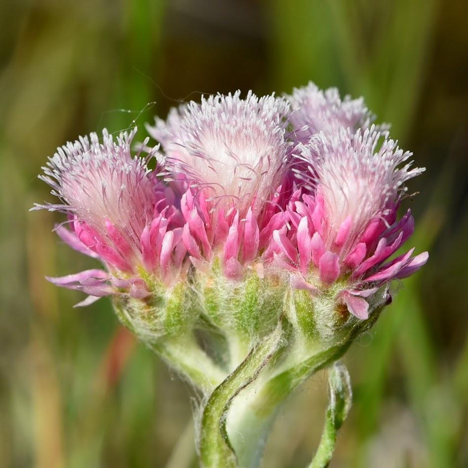 bloem (vrouwelijk)