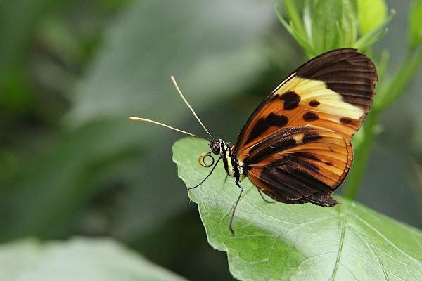 ali di farfalla di utente cancellato