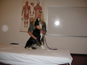 Photo: Border Collies love massage!
