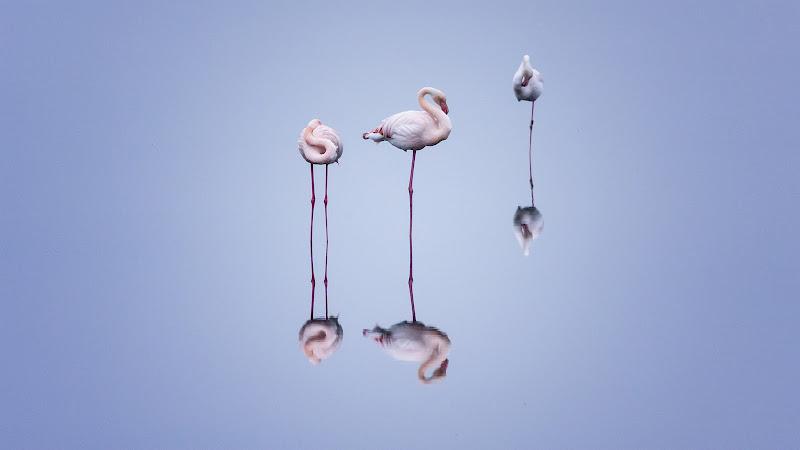 """Flamingos trio"" di Bitop62"