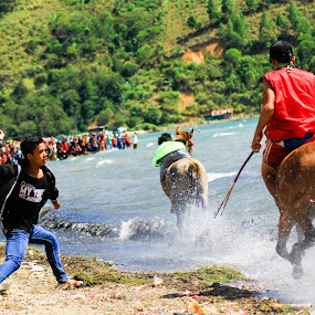 Gayo Traditional Horse Race by Khairi Went - Sports & Fitness Other Sports ( nature, racing, horse, sports, traditional, gayo, race, people,  )