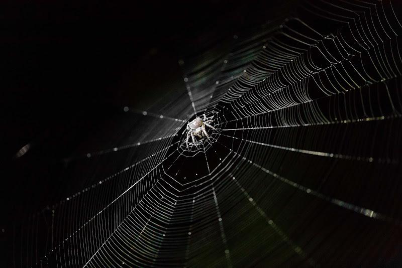 Spider net di utente cancellato